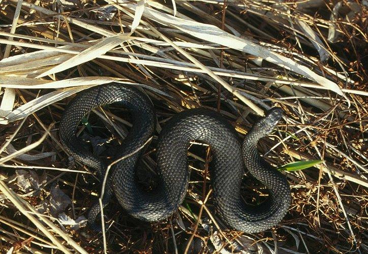 змеи зимуют фото